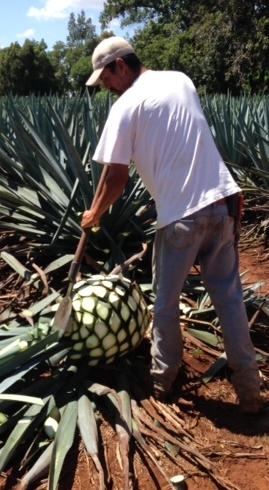 mexikaner rezept tequila